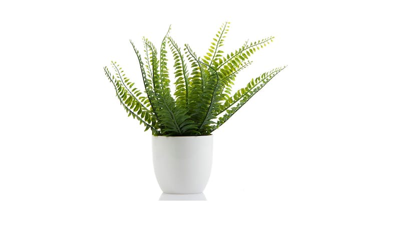 Florabelle Boston Fern I/Pot - White