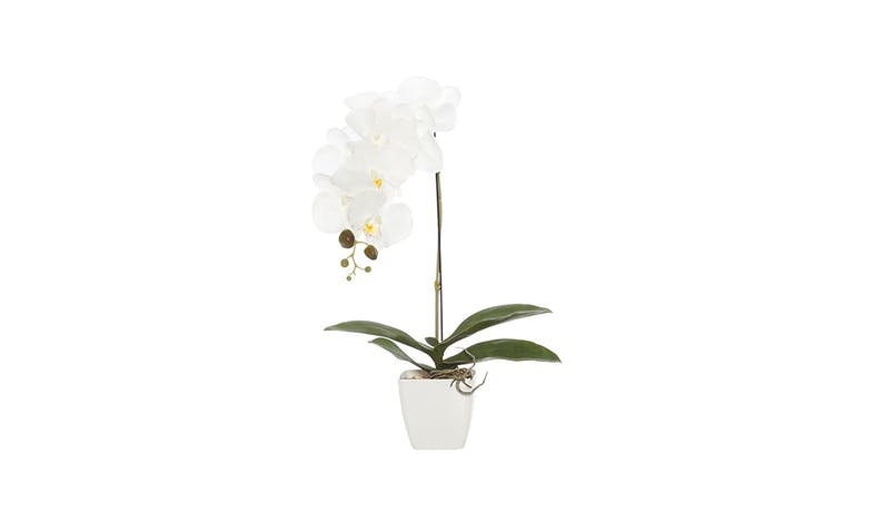 Swing Gift Simone PVC Pot Large Orchid - White - 01