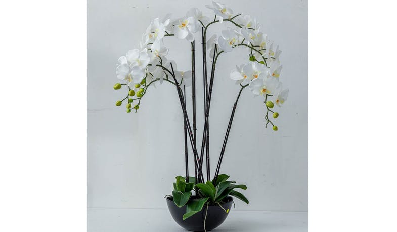 Stems Orchid Vase